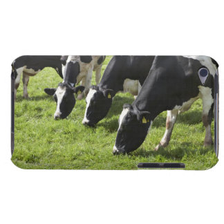 Dairy cows grazing in pasture iPod Case-Mate case