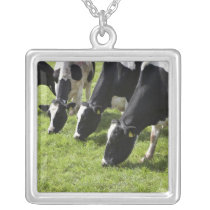 Dairy cows grazing in pasture silver plated necklace