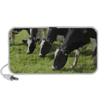 Dairy cows grazing in pasture travelling speaker