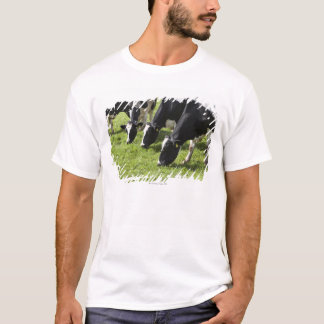 Dairy cows grazing in pasture T-Shirt