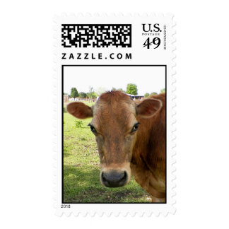 Dairy Expert Postage Stamps