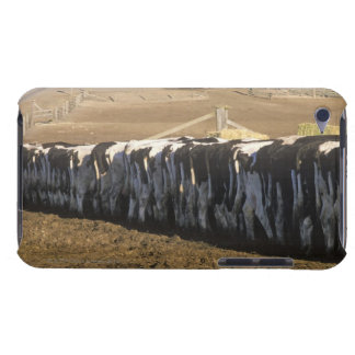 'Dairy farm at feeding time, Point Reyes, CA' Barely There iPod Case