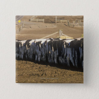 'Dairy farm at feeding time, Point Reyes, CA' Button