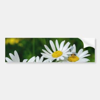 daises bumper stickers