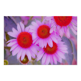Daises by JLGallery Poster