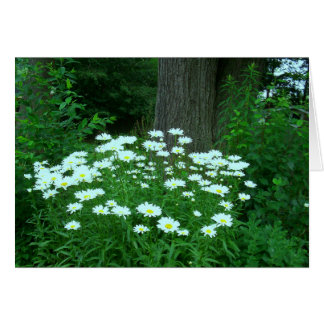 Daises For You! Greeting/Note Cards
