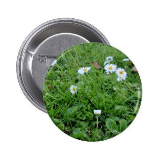 Daises on green 2 inch round button