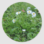 Daises on green classic round sticker
