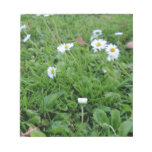Daises on green scratch pad