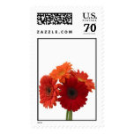 daises postage stamps