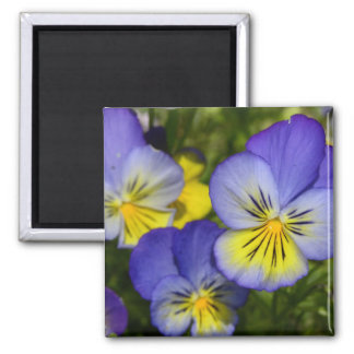 Daisey 2 Inch Square Magnet