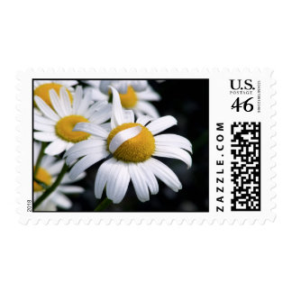 Daisey 2 stamps