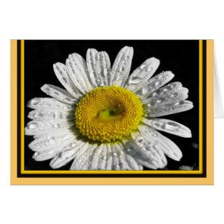 Daisey Cards/Blank Card