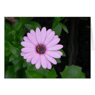 Daisey Flower Notecard
