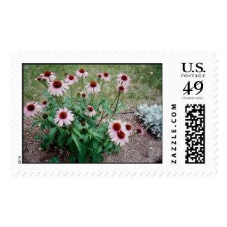 daisey postage