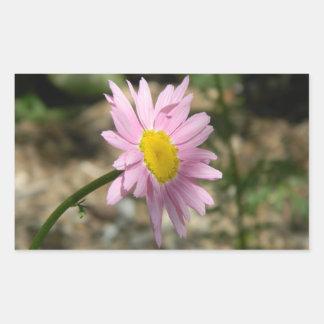 Daisey rosado pegatina rectangular
