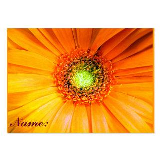 Daisie_ Business Card