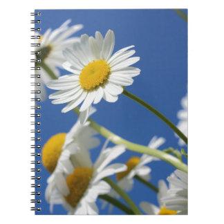 daisies-388946_1920 daisies flower spring plant na spiral notebook