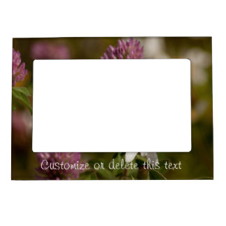 Daisies and Clover; Customizable Magnetic Frame