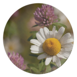 Daisies and Clover; No Text Dinner Plate