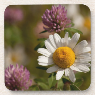 Daisies and Clover; No Text Drink Coaster