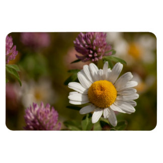 Daisies and Clover; No Text Magnet