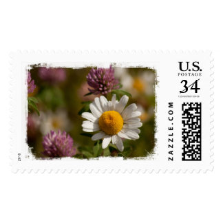 Daisies and Clover; No Text Postage Stamp