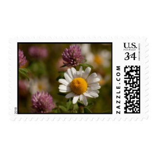 Daisies and Clover; No Text Stamp