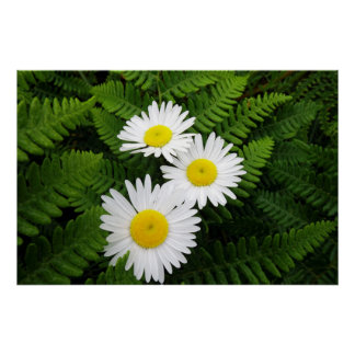 Daisies and Fern Poster