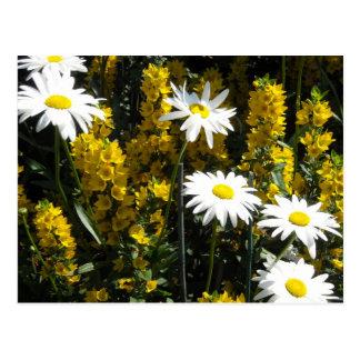 Daisies and Foxgloves Post Card