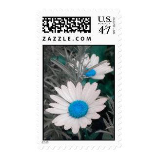 Daisies -Blue Postage