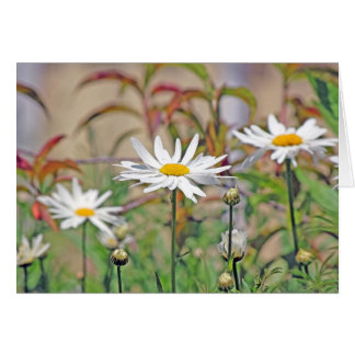 Daisies Cards