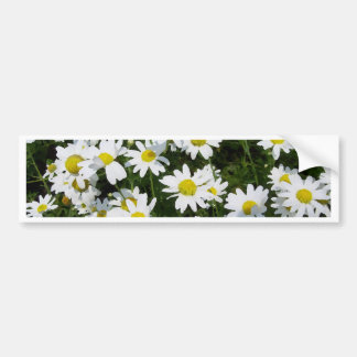 Daisies Daisies and Daisies English Garden Flowers Bumper Sticker