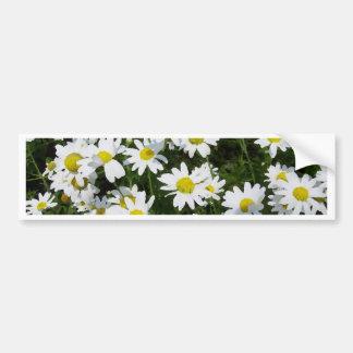 Daisies Daisies and Daisies English Garden Flowers Car Bumper Sticker