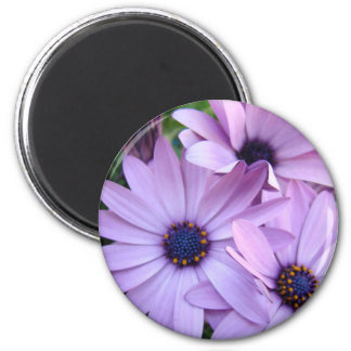 Daisies Flowers 1 Mothers Day Gifts Cards Mugs 2 Inch Round Magnet