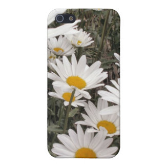 Daisies Galore Cover For iPhone SE/5/5s