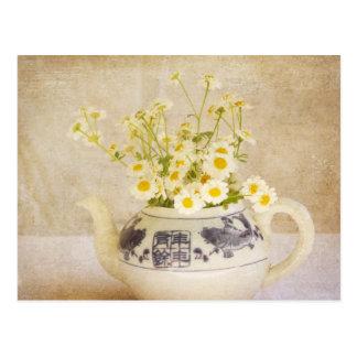 Daisies in a Teapot Postcard