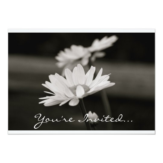 Daisies in Black and White Card