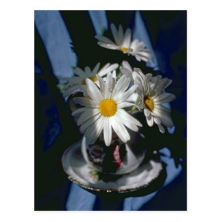 Daisies in Flower Design Bowl Post Card