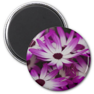 daisies in spring magnet