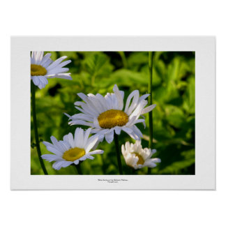 Daisies in the garden fun colorful summer photo poster