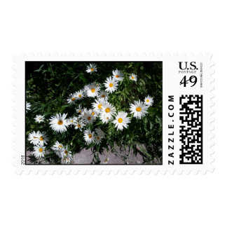 Daisies in Vail, CO No wording2 Stamp