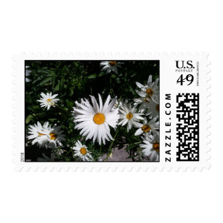 Daisies in Vail, CO No Wording Postage