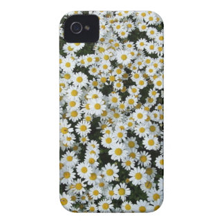 daisies iPhone 4 cover