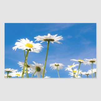 Daisies meadow rectangular sticker