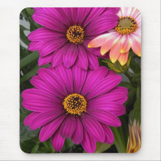 Daisies Mousepads