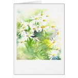 Daisies on green greeting cards