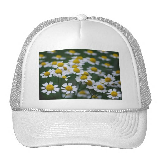 Daisies peace sign trucker hat