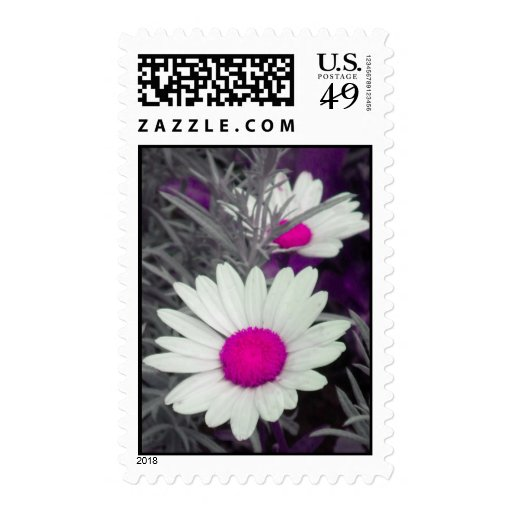 Daisies -Pink Postage Stamps