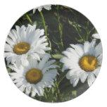 Daisies Plate